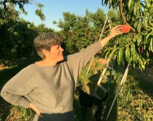 Picking Peaches, Fresno
